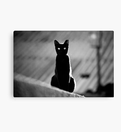place in the sun for a black cat Canvas Print