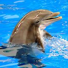 Dolphin with a Smile by Rosalie Scanlon