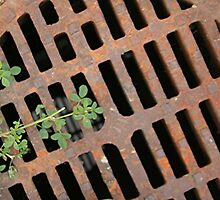 Storm Drain with a touch of green by Stephen Thomas