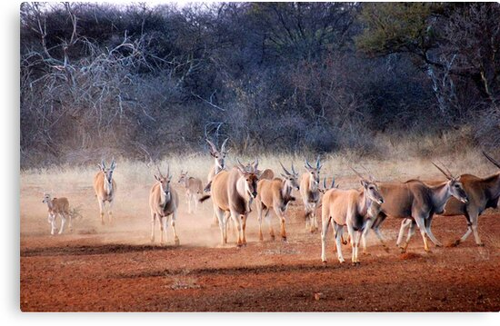 THE ELAND - Taurotragus oryx by Magriet Meintjes