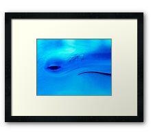 Blu friend Framed Print
