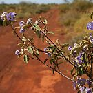 Thargominda Nightshade by Blue Gum Pictures