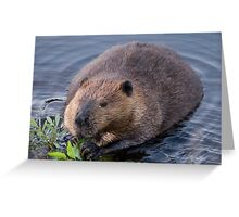Beaver Shot Greeting Card