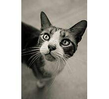 Gray Cat was in love with me; California Sidewalk Photographic Print