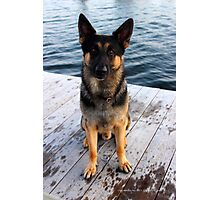 Deutscher Schäferhund - German Shepherd 'Bruno' | Center Moriches, New York Photographic Print