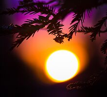 Californian Sunset: roof tops and pine trees by va103