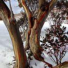 colourful snow gums by LenitaB