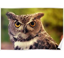 Merlin in the Sun - Great-Horned Owl Poster