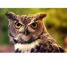 Merlin in the Sun - Great-Horned Owl Photographic Print