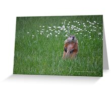 Marmota Monax - Groundhog | Center Moriches, New York  Greeting Card