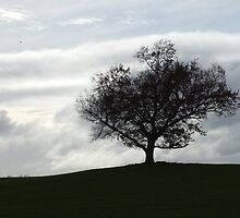oNe trEE by Mark  Wilson