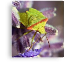 The Green bug Canvas Print