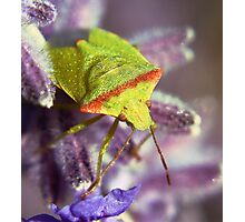 The Green bug Photographic Print