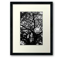 Confucius Temple tree Framed Print