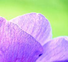 Soft Petals by tmbradley1015