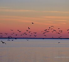 Flock | Center Moriches, New York  by © Sophie W. Smith