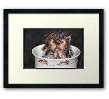 Drowned Rat Framed Print