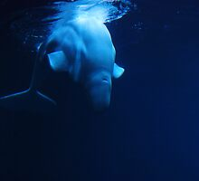Beluga Whale by trwphotography