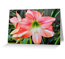 Candy Stripes Greeting Card