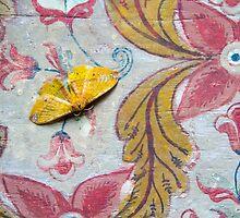 Samadhi Moth by darkydoors