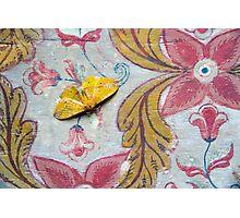 Samadhi Moth Photographic Print