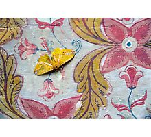 Samadhi Moth Photographic Print