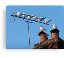 Urban Roost Canvas Print