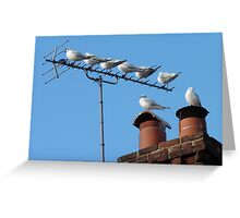 Urban Roost Greeting Card