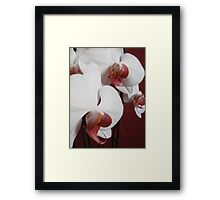 Orchid collection Framed Print