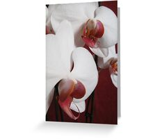 Orchid collection Greeting Card