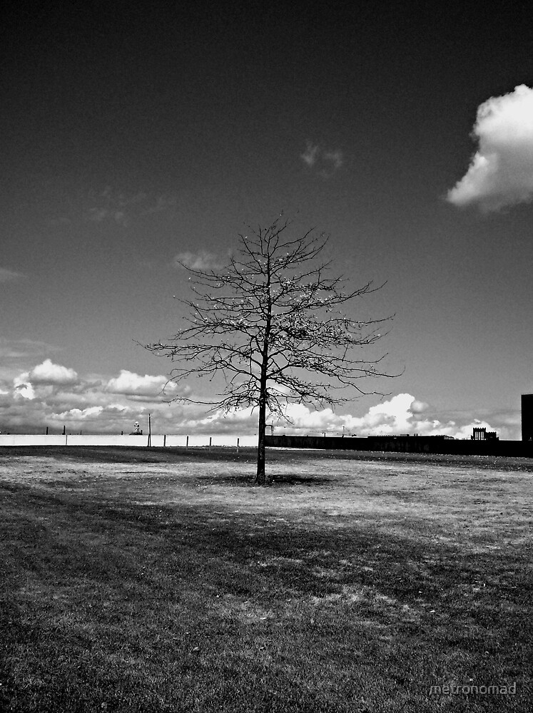 Lone Tree by metronomad