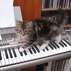 65 - MITCH THE PIANIST (D.E. 2008) by BLYTHPHOTO