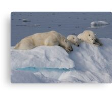 Bears On Ice 2 Canvas Print