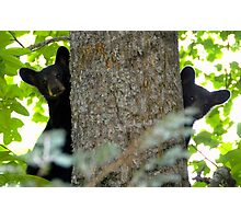 Two Cubs Photographic Print