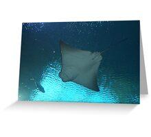 Manta Ray from Below Greeting Card