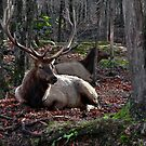 Elk King and his Queen  by Poete100