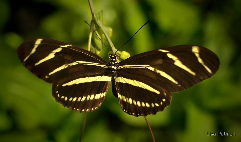 Zebra Heliconian by Lisa G. Putman