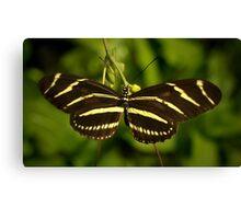 Zebra Heliconian Canvas Print