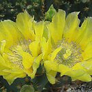 Cactus Flower with a Textured Look by Rosalie Scanlon