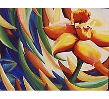 Daffodil Dance Photographic Print