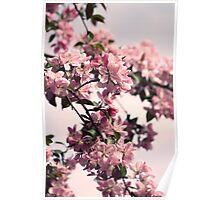 Plum Blossoms Poster
