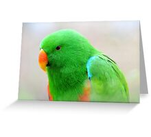 Male Eclectus Parrot Greeting Card