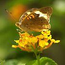 Common Buckeye I by Lisa G. Putman