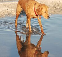Reflection of a Dogs Life by Carol Barona