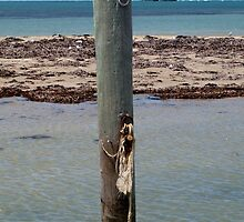 Shoalwater Post by kalaryder