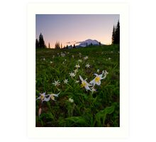 Avalanche of Lillies Art Print