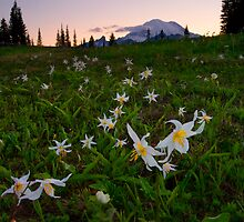 Avalanche of Lillies by DawsonImages