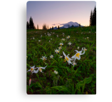 Avalanche of Lillies Canvas Print