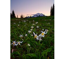 Avalanche of Lillies Photographic Print