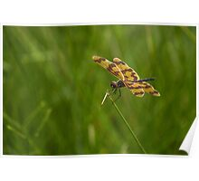 Patterned Wings Poster